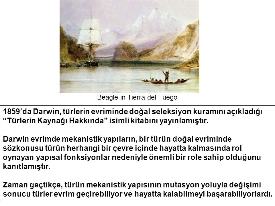 Beagle in Tierra del Fuego 1859'da Darwin, türlerin evriminde doğal seleksiyon kuramını açıkladığı Türlerin Kaynağı Hakkında isimli kitabını yayınlamıştır.