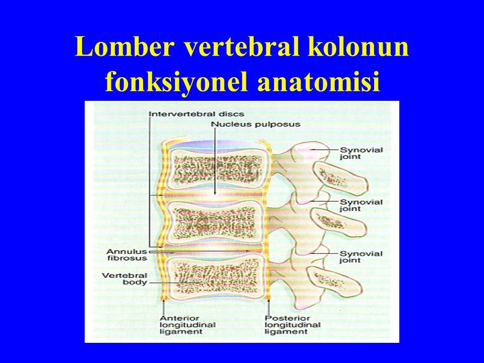 Lomber vertebral kolonun fonksiyonel anatomisi