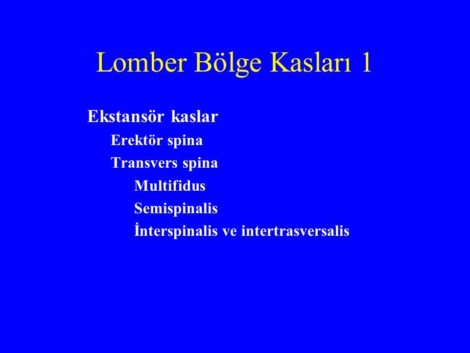 Lomber Bölge Kasları 1 Ekstansör kaslar Erektör spina Transvers spina Multifidus Semispinalis İnterspinalis ve intertrasversalis
