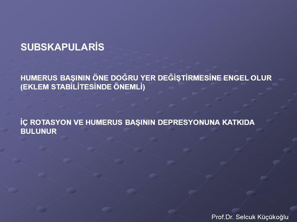 Prof.Dr. Selcuk Küçükoğlu SUBSKAPULARİS HUMERUS BAŞININ ÖNE DOĞRU YER DEĞİŞTİRMESİNE ENGEL OLUR (EKLEM STABİLİTESİNDE ÖNEMLİ) İÇ ROTASYON VE HUMERUS B