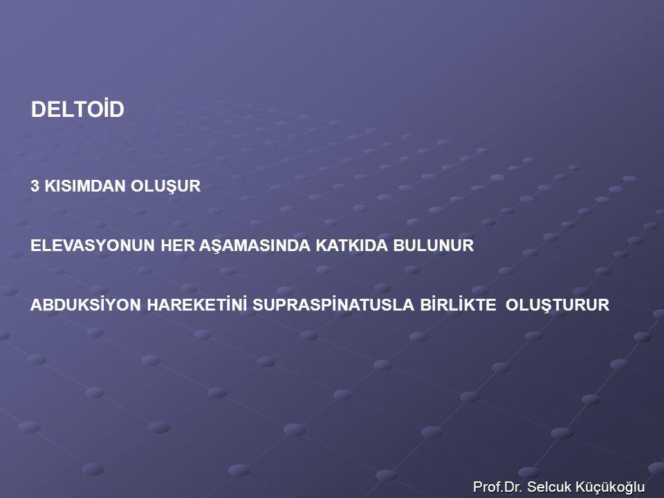 Prof.Dr. Selcuk Küçükoğlu DELTOİD 3 KISIMDAN OLUŞUR ELEVASYONUN HER AŞAMASINDA KATKIDA BULUNUR ABDUKSİYON HAREKETİNİ SUPRASPİNATUSLA BİRLİKTE OLUŞTURU