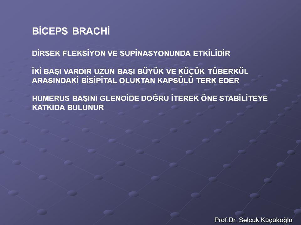 Prof.Dr. Selcuk Küçükoğlu BİCEPS BRACHİ DİRSEK FLEKSİYON VE SUPİNASYONUNDA ETKİLİDİR İKİ BAŞI VARDIR UZUN BAŞI BÜYÜK VE KÜÇÜK TÜBERKÜL ARASINDAKİ BİSİ