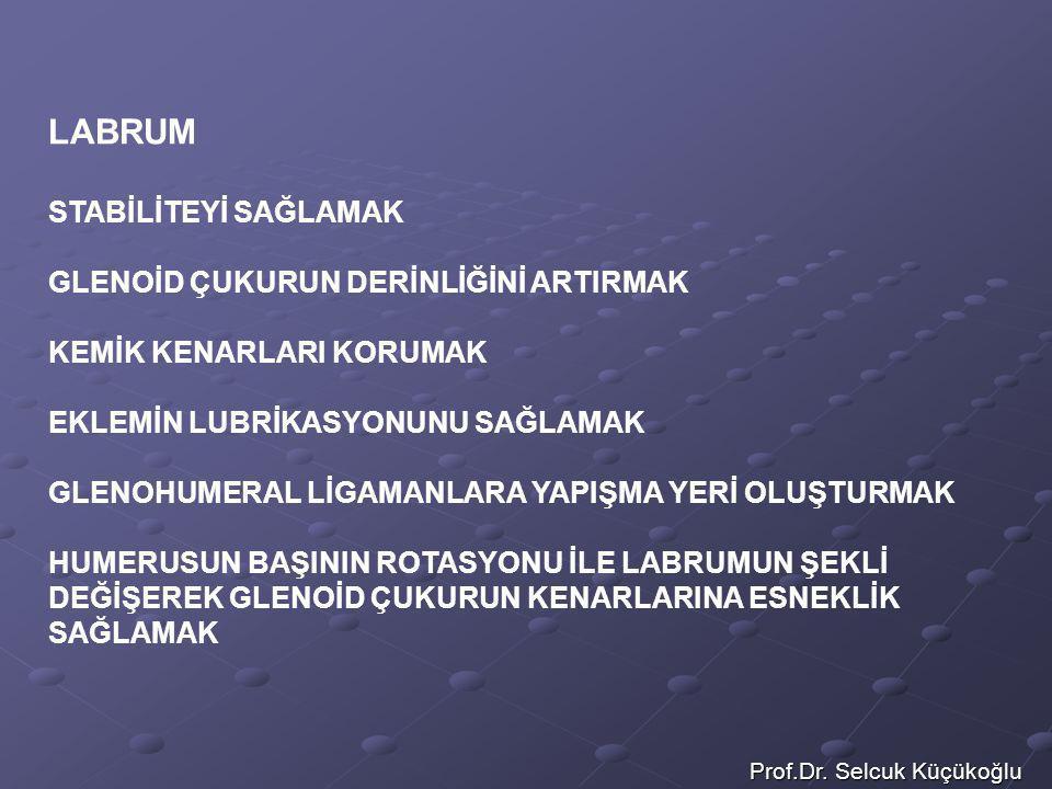 Prof.Dr. Selcuk Küçükoğlu LABRUM STABİLİTEYİ SAĞLAMAK GLENOİD ÇUKURUN DERİNLİĞİNİ ARTIRMAK KEMİK KENARLARI KORUMAK EKLEMİN LUBRİKASYONUNU SAĞLAMAK GLE