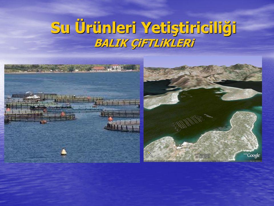 Su Ürünleri Yetiştiriciliği BALIK ÇiFTLiKLERi