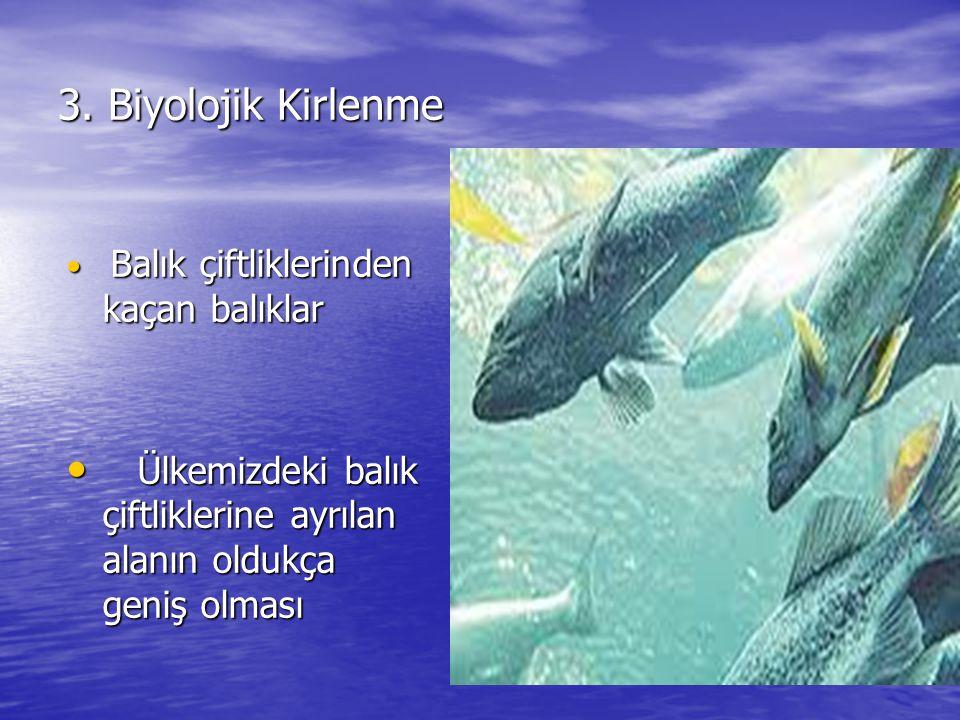 3. Biyolojik Kirlenme Balık çiftliklerinden kaçan balıklar Balık çiftliklerinden kaçan balıklar Ülkemizdeki balık çiftliklerine ayrılan alanın oldukça