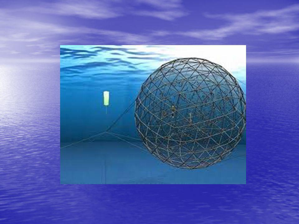 Kafeslerle İlgili Girdiler ve Çıktılar Yem, yavru, ilaç Balık Deniz ortamı Kafes Atıklar (dışkı, yenmeyen yem vs.)