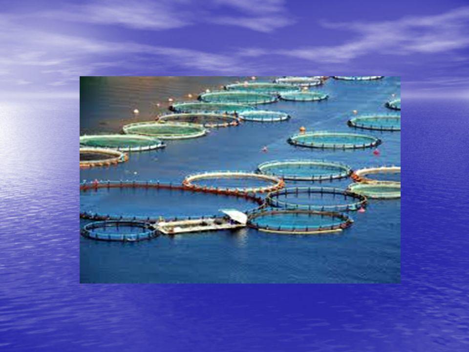  Kirliliğe neden olan etmenler  balık dışkıları  yenmeyen yapay yemler ile oluşan azot ve fosfat gibi kimyasallar  verimi arttırmak amacıyla kullanılan hormonlar, dezenkfektanlar, vitaminler, antibiyotikler ve aşılar