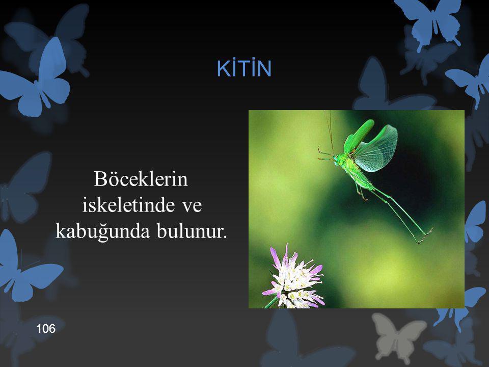 KİTİN Böceklerin iskeletinde ve kabuğunda bulunur. 106