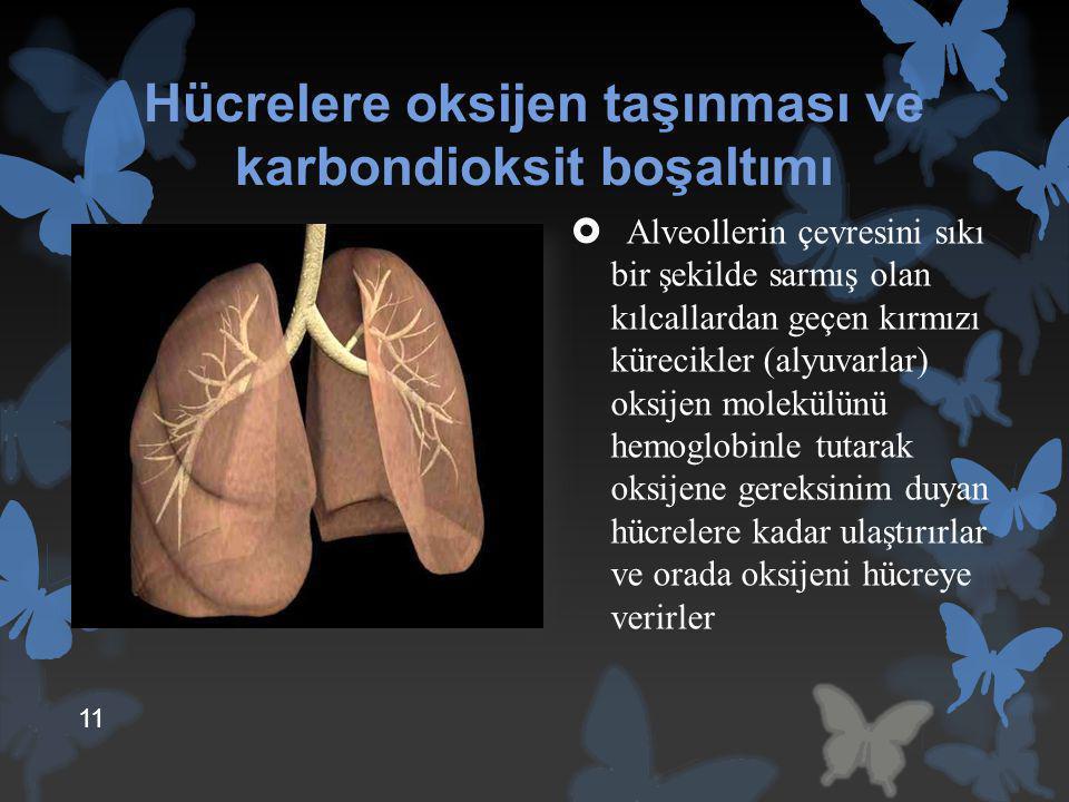 Hücrelere oksijen taşınması ve karbondioksit boşaltımı  Alveollerin çevresini sıkı bir şekilde sarmış olan kılcallardan geçen kırmızı kürecikler (aly