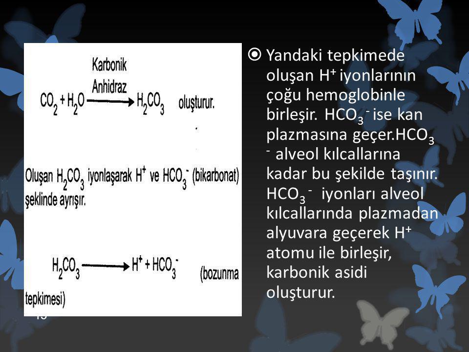  Yandaki tepkimede oluşan H + iyonlarının çoğu hemoglobinle birleşir. HCO 3 - ise kan plazmasına geçer.HCO 3 - alveol kılcallarına kadar bu şekilde t
