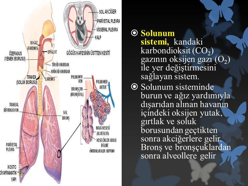  Solunum sistemi, kandaki karbondioksit (CO 2 ) gazının oksijen gazı (O 2 ) ile yer değiştirmesini sağlayan sistem.  Solunum sisteminde burun ve ağı