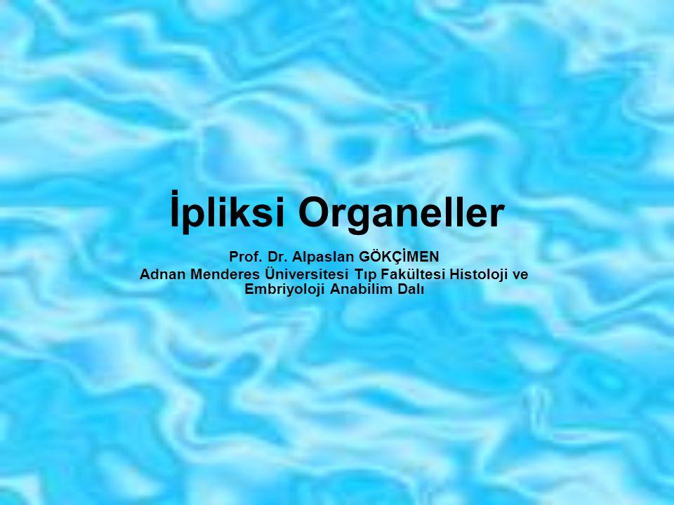 Tanımlama Membransı organeller tamamen veya kısmen metabolik olaylarda görev alırlar.