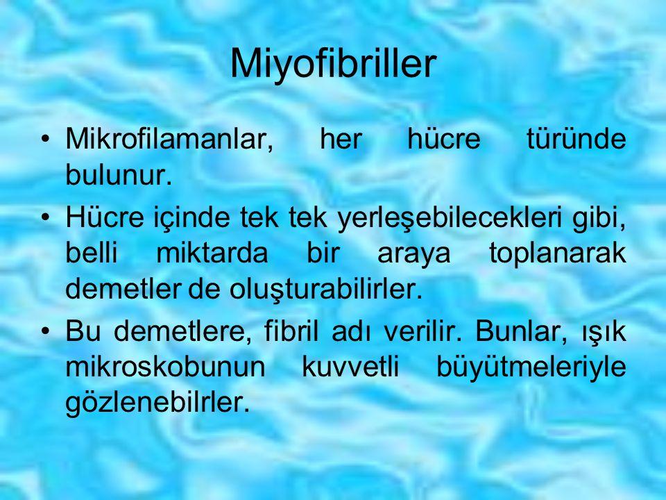 Miyofibriller Mikrofilamanlar, her hücre türünde bulunur. Hücre içinde tek tek yerleşebilecekleri gibi, belli miktarda bir araya toplanarak demetler d