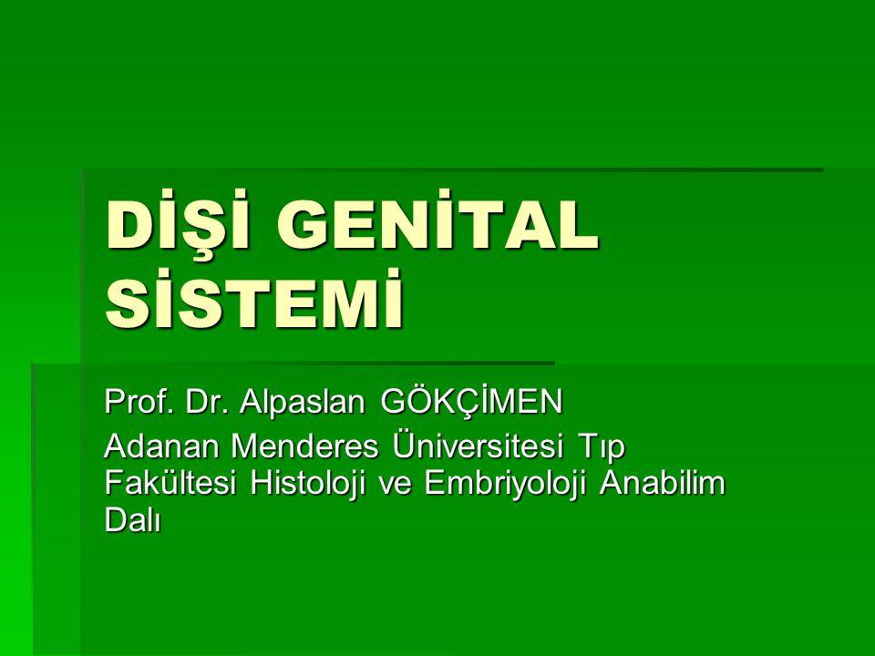 DİŞİ GENİTAL SİSTEMİ Prof. Dr. Alpaslan GÖKÇİMEN Adanan Menderes Üniversitesi Tıp Fakültesi Histoloji ve Embriyoloji Anabilim Dalı