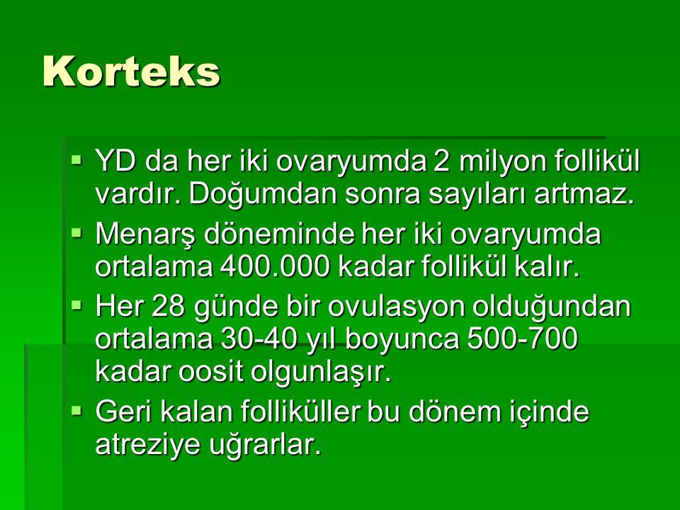 Korteks  YD da her iki ovaryumda 2 milyon follikül vardır.