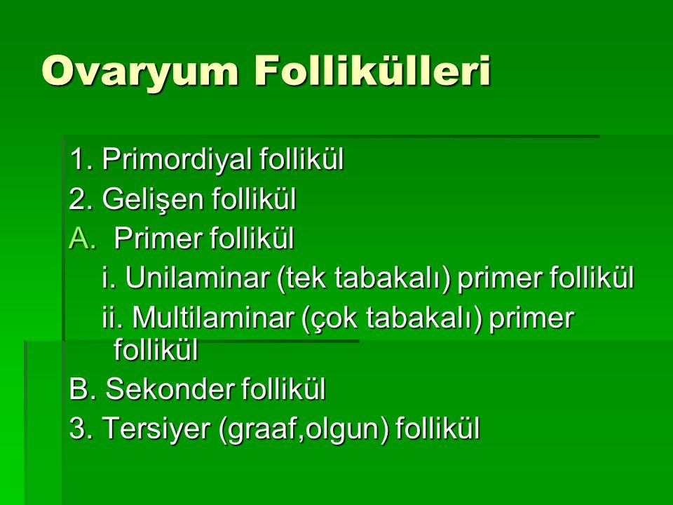 Ovaryum Follikülleri 1. Primordiyal follikül 2. Gelişen follikül A.Primer follikül i. Unilaminar (tek tabakalı) primer follikül i. Unilaminar (tek tab