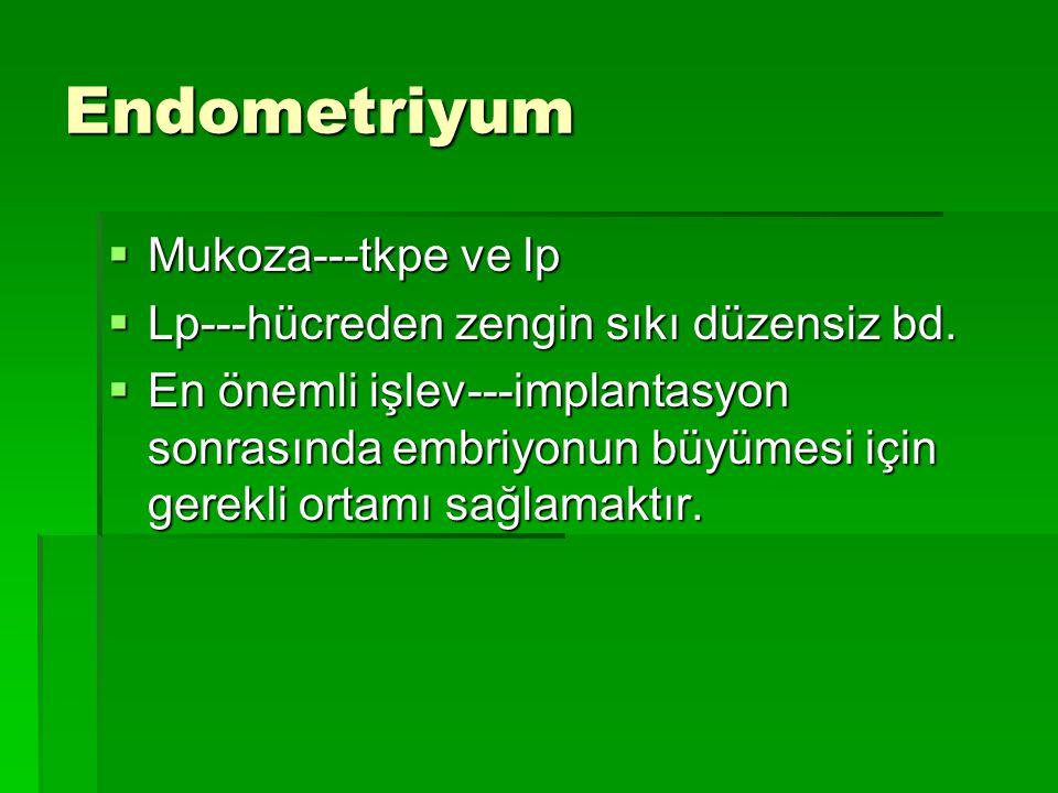 Endometriyum  Mukoza---tkpe ve lp  Lp---hücreden zengin sıkı düzensiz bd.  En önemli işlev---implantasyon sonrasında embriyonun büyümesi için gerek