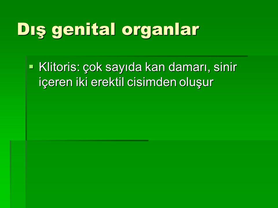 Dış genital organlar  Klitoris: çok sayıda kan damarı, sinir içeren iki erektil cisimden oluşur