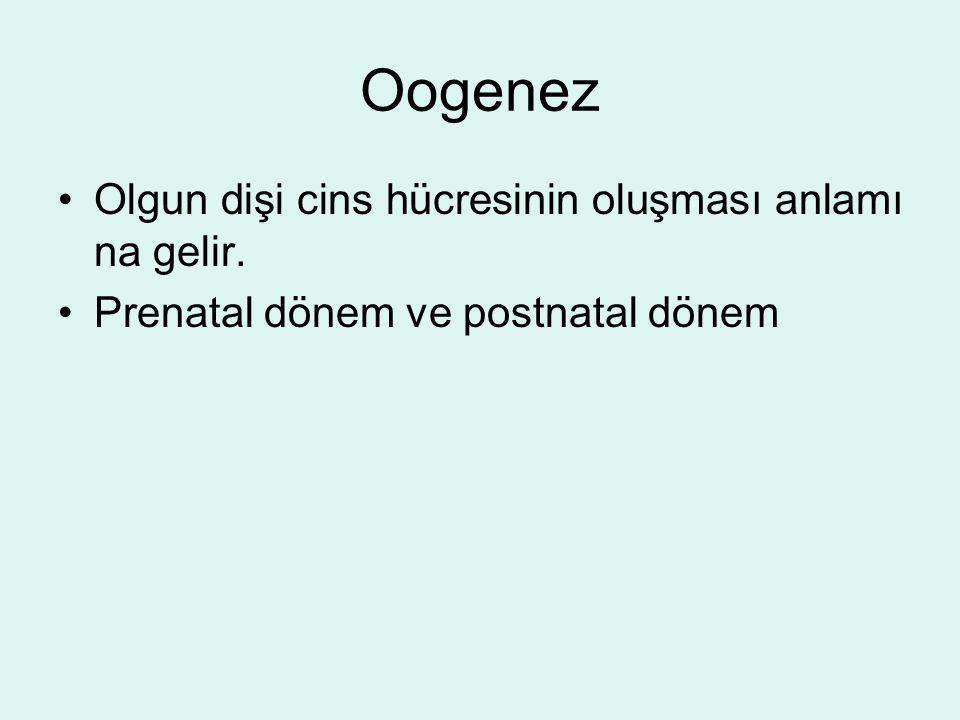 Oogenez Olgun dişi cins hücresinin oluşması anlamı na gelir. Prenatal dönem ve postnatal dönem