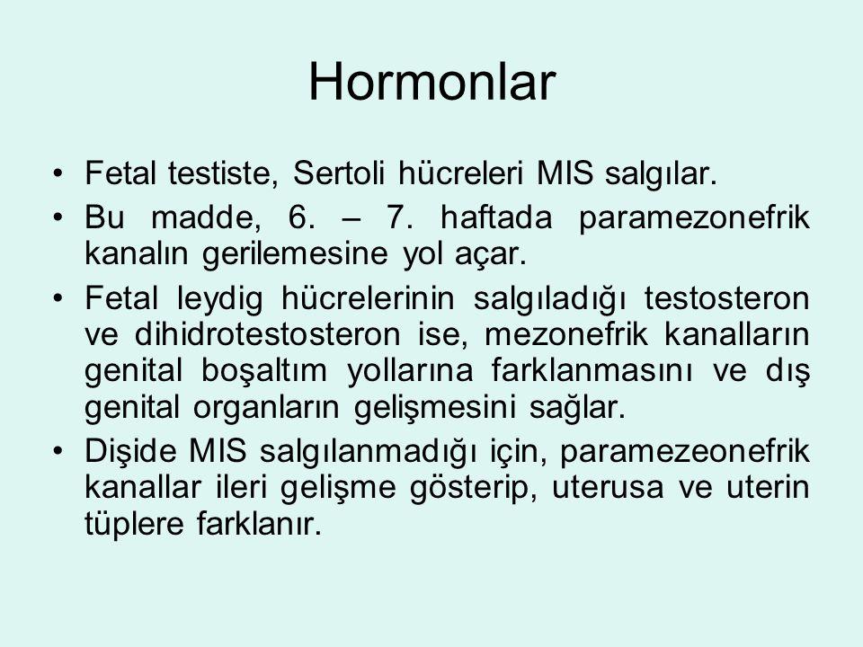 Hormonlar Fetal testiste, Sertoli hücreleri MIS salgılar. Bu madde, 6. – 7. haftada paramezonefrik kanalın gerilemesine yol açar. Fetal leydig hücrele