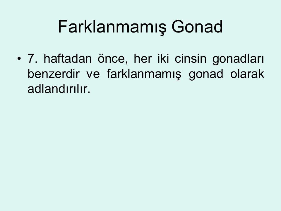 Farklanmamış Gonad 7. haftadan önce, her iki cinsin gonadları benzerdir ve farklanmamış gonad olarak adlandırılır.