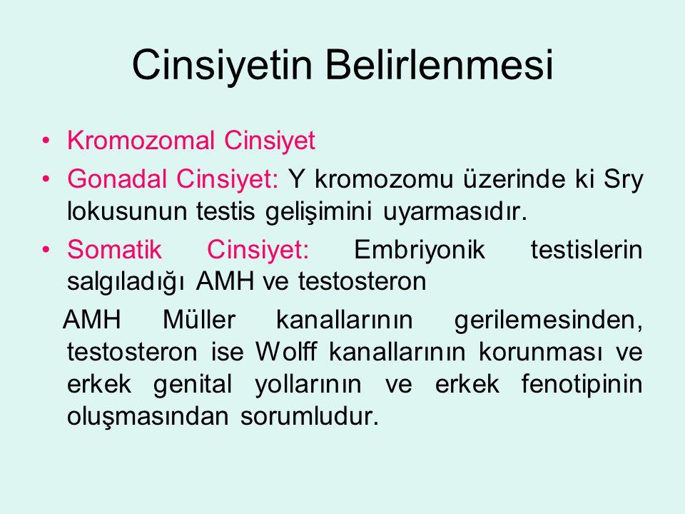 Cinsiyetin Belirlenmesi Kromozomal Cinsiyet Gonadal Cinsiyet: Y kromozomu üzerinde ki Sry lokusunun testis gelişimini uyarmasıdır. Somatik Cinsiyet: E