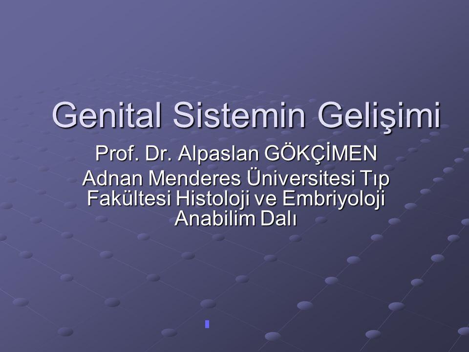 AMH  Sertoli hücrelerince salınır. Puberteye kadar devam eder.