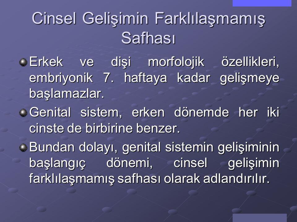 Genital Sistemin Gelişimi Prof.Dr.