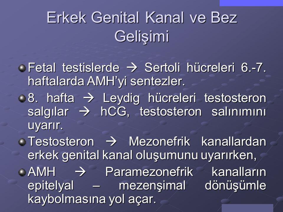 Genital Kanalların Gelişimi 8.