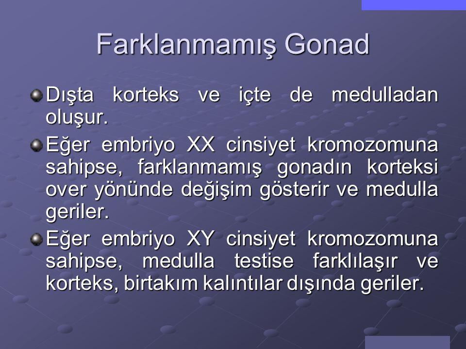 Farklanmamış Gonad Dışta korteks ve içte de medulladan oluşur.