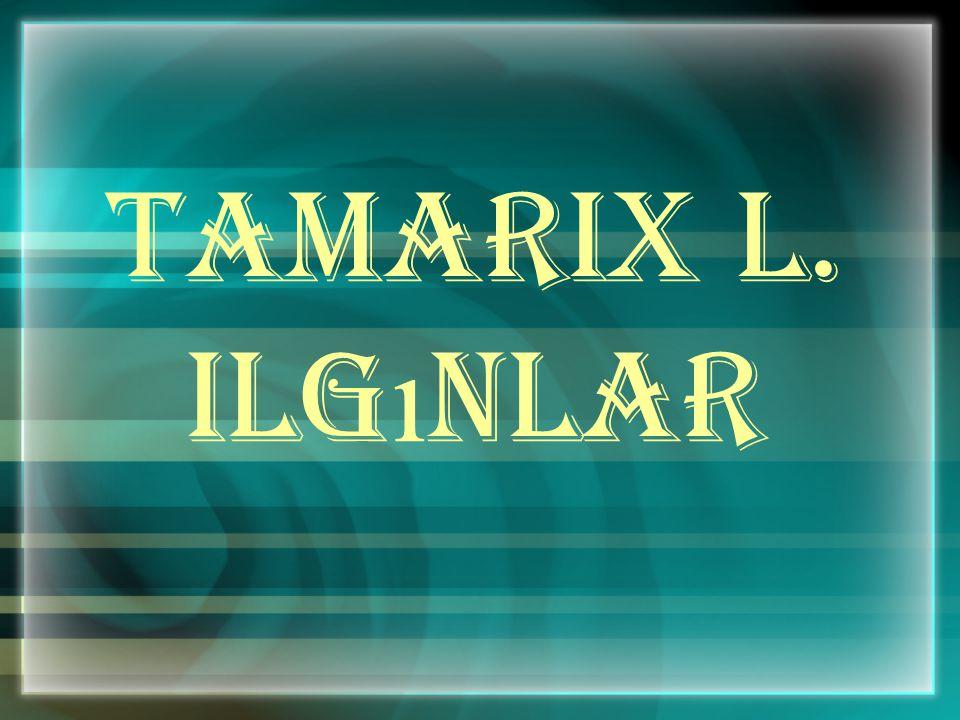 Tamarix L. Ilg ı nlar