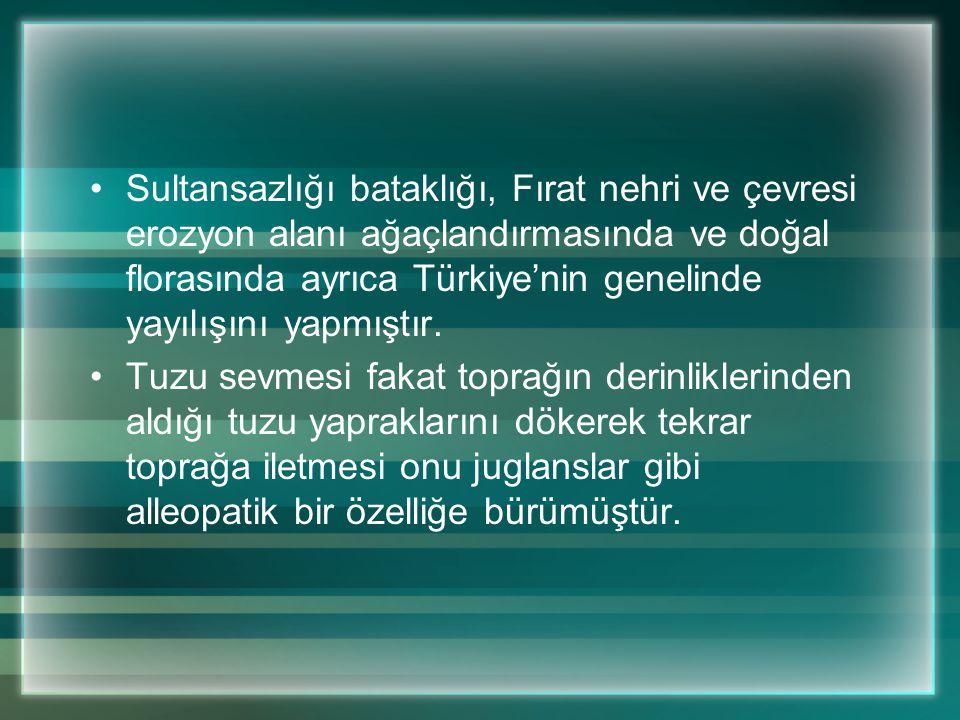 Sultansazlığı bataklığı, Fırat nehri ve çevresi erozyon alanı ağaçlandırmasında ve doğal florasında ayrıca Türkiye'nin genelinde yayılışını yapmıştır.