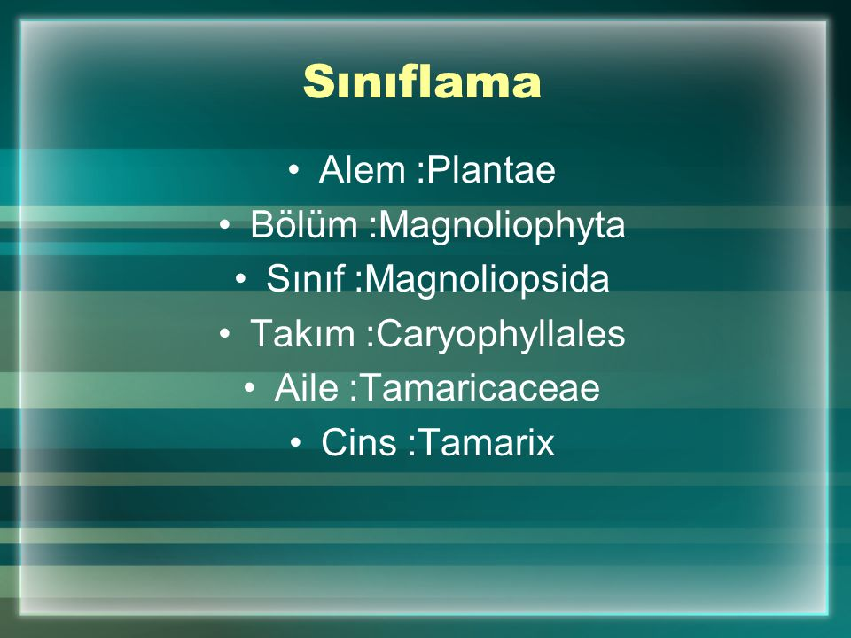 Sınıflama Alem :Plantae Bölüm :Magnoliophyta Sınıf :Magnoliopsida Takım :Caryophyllales Aile :Tamaricaceae Cins :Tamarix