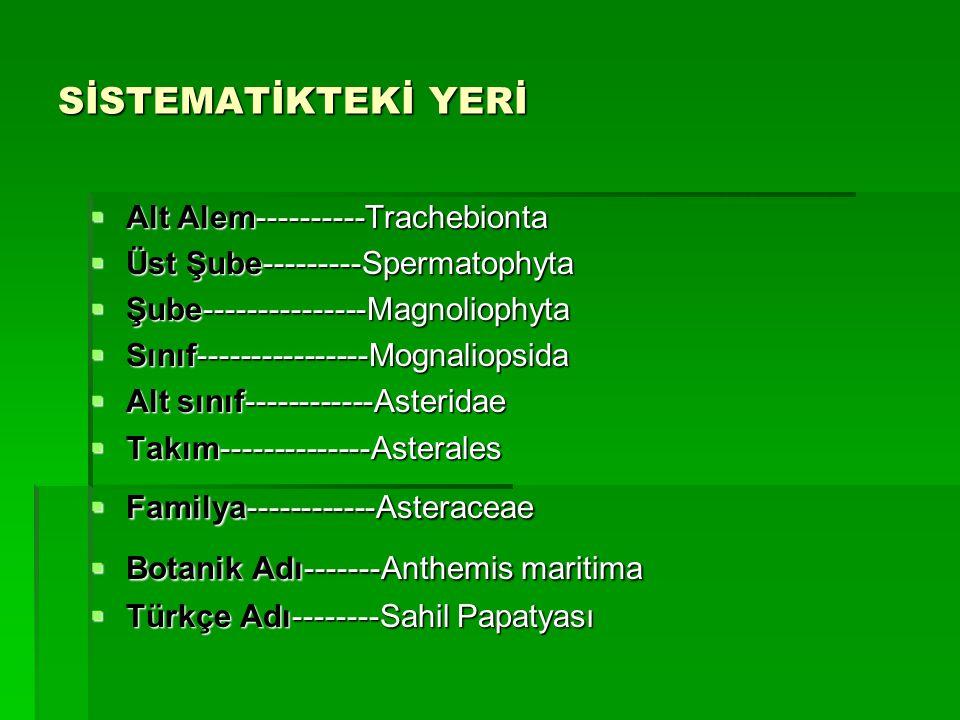 SİSTEMATİKTEKİ YERİ  Alt Alem----------Trachebionta  Üst Şube---------Spermatophyta  Üst Şube---------Spermatophyta  Şube---------------Magnolioph