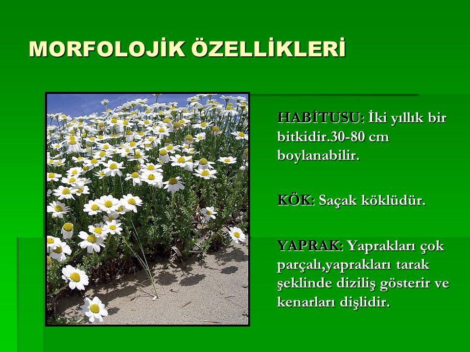 MORFOLOJİK ÖZELLİKLERİ HABİTUSU: İki yıllık bir bitkidir.30-80 cm boylanabilir. KÖK: Saçak köklüdür. YAPRAK: Yaprakları çok parçalı,yaprakları tarak ş