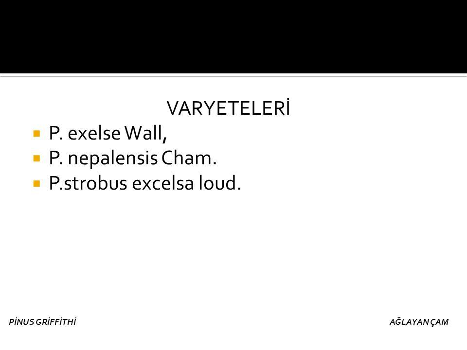 VARYETELERİ  P. exelse Wall,  P. nepalensis Cham.  P.strobus excelsa loud. PİNUS GRİFFİTHİ AĞLAYAN ÇAM