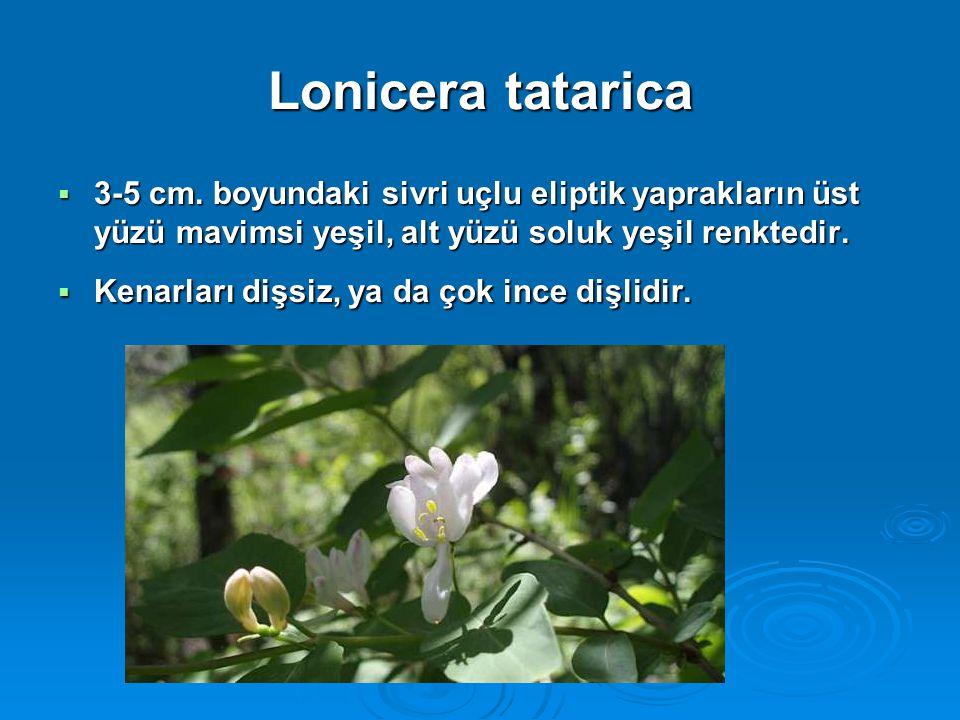 Lonicera tatarica  3-5 cm. boyundaki sivri uçlu eliptik yaprakların üst yüzü mavimsi yeşil, alt yüzü soluk yeşil renktedir.  Kenarları dişsiz, ya da