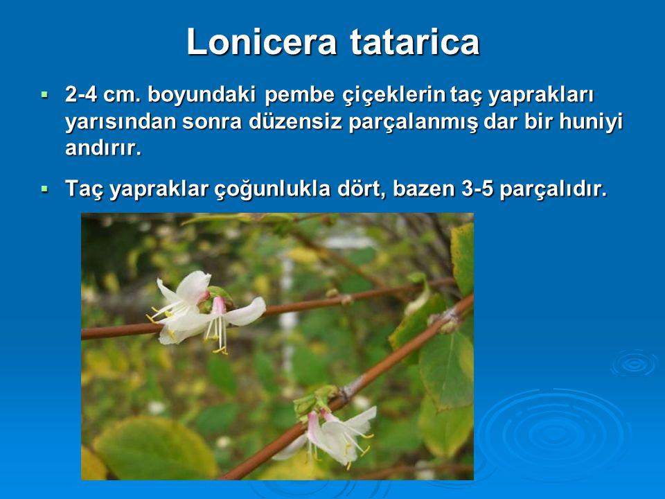 Lonicera tatarica  2-4 cm. boyundaki pembe çiçeklerin taç yaprakları yarısından sonra düzensiz parçalanmış dar bir huniyi andırır.  Taç yapraklar ço