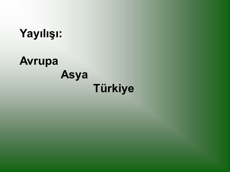 Yayılışı: Avrupa Asya Türkiye
