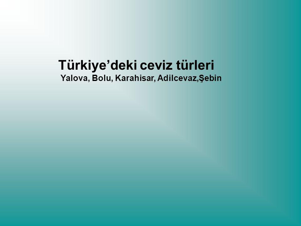 Türkiye'deki ceviz türleri Yalova, Bolu, Karahisar, Adilcevaz,Şebin