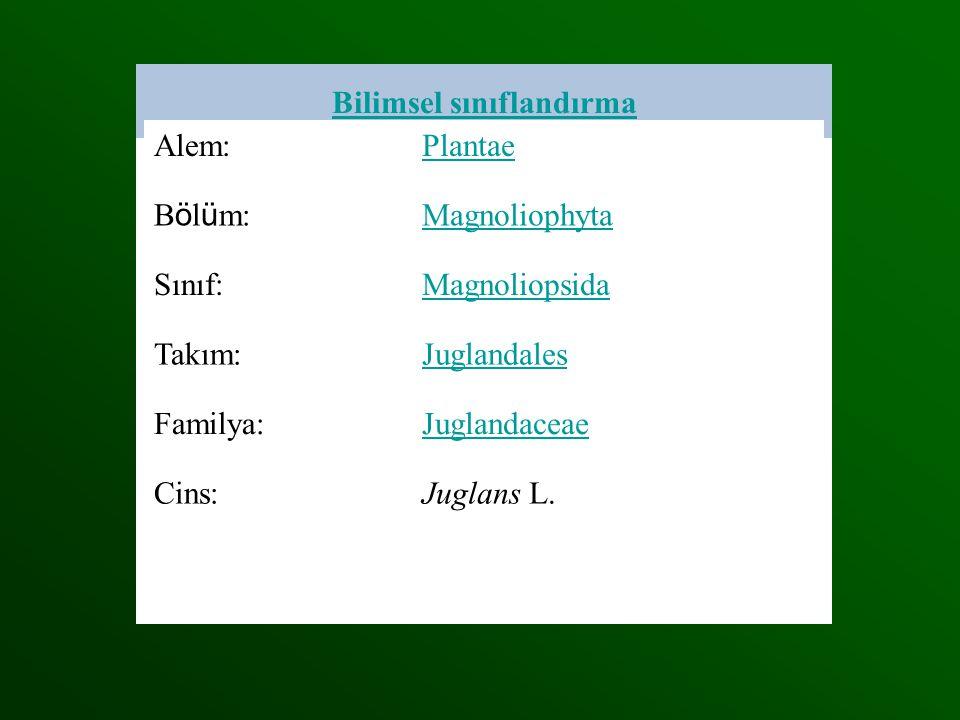 Alem:Plantae B ö l ü m: Magnoliophyta Sınıf:Magnoliopsida Takım:Juglandales Familya:Juglandaceae Cins:Juglans L. L. Bilimsel sınıflandırma Alem:Planta
