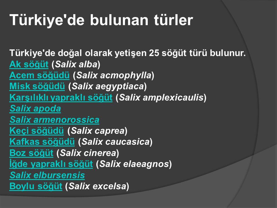 Türkiye'de bulunan türler Türkiye'de doğal olarak yetişen 25 söğüt türü bulunur. Ak söğütAk söğüt (Salix alba) Acem söğüdüAcem söğüdü (Salix acmophyll