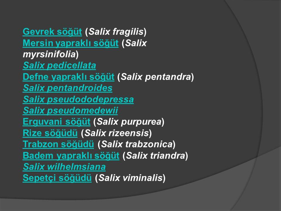 Gevrek söğütGevrek söğüt (Salix fragilis) Mersin yapraklı söğütMersin yapraklı söğüt (Salix myrsinifolia) Salix pedicellata Defne yapraklı söğütDefne