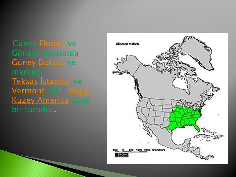 Güney Florida ve Güneydoğusunda Güney Dakota ve merkezi Teksas,İstanbul ve Vermont. DUT doğu Kuzey Amerika özgü bir türüdür.Florida Güney Dakota Teksa