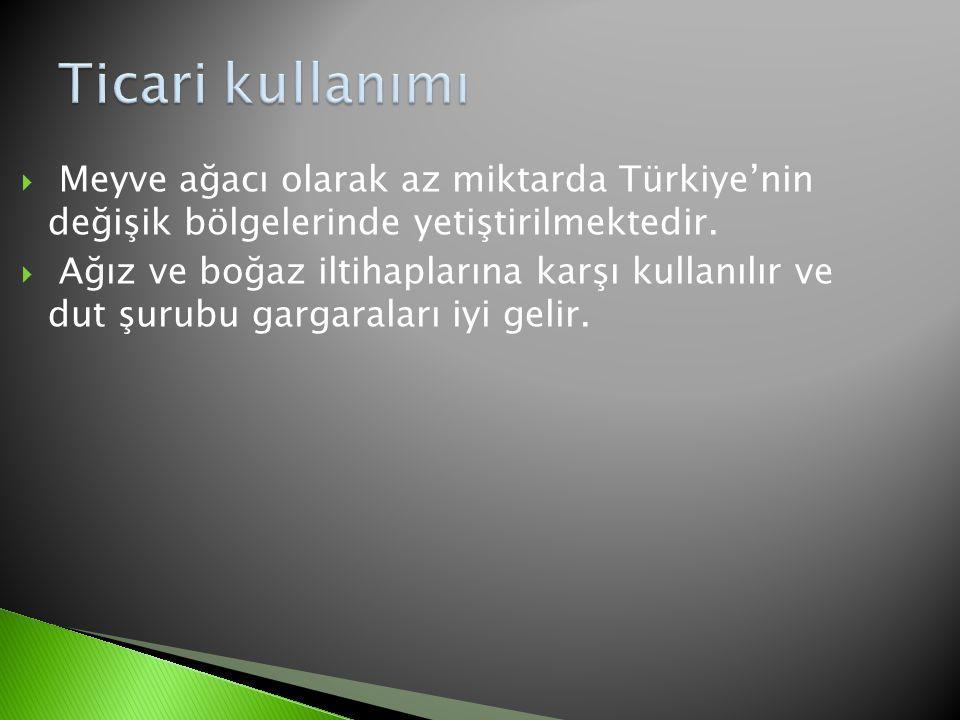  Meyve ağacı olarak az miktarda Türkiye'nin değişik bölgelerinde yetiştirilmektedir.  Ağız ve boğaz iltihaplarına karşı kullanılır ve dut şurubu gar