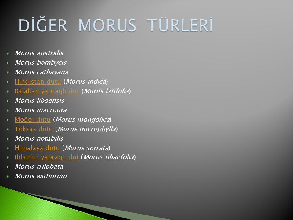  Morus australis  Morus bombycis  Morus cathayana  Hindistan dutu (Morus indica) Hindistan dutu  Balaban yapraqlı dut (Morus latifolia) Balaban y