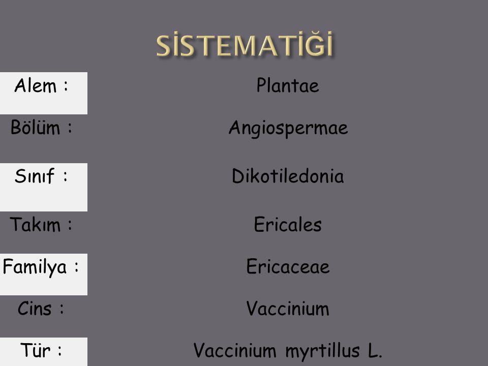 Alem : Plantae Bölüm : Angiospermae Sınıf : Dikotiledonia Takım : Ericales Familya : Ericaceae Cins : Vaccinium Tür : Vaccinium myrtillus L.