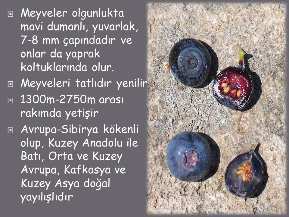  Meyveler olgunlukta mavi dumanlı, yuvarlak, 7-8 mm çapındadır ve onlar da yaprak koltuklarında olur.  Meyveleri tatlıdır yenilir  1300m-2750m aras