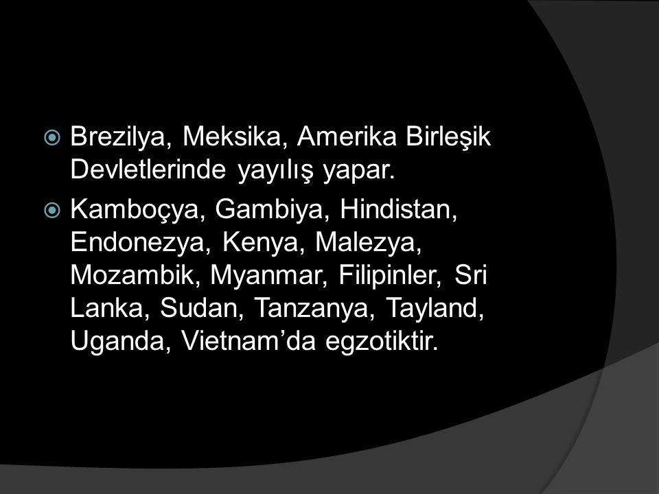  Brezilya, Meksika, Amerika Birleşik Devletlerinde yayılış yapar.  Kamboçya, Gambiya, Hindistan, Endonezya, Kenya, Malezya, Mozambik, Myanmar, Filip