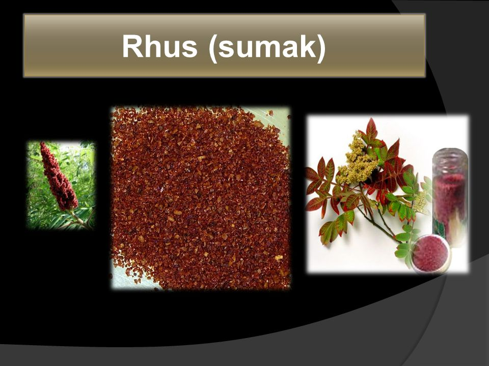 Rhus (sumak)